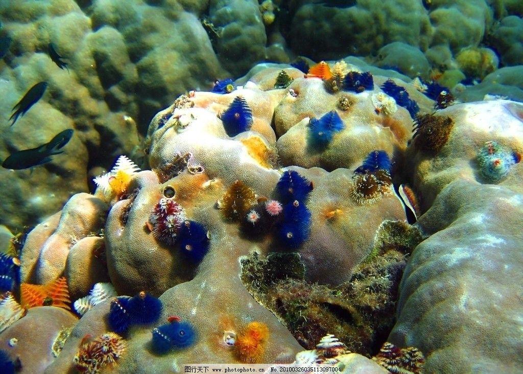 海底世界 海底 海洋生物 生物世界 摄影 72dpi jpg