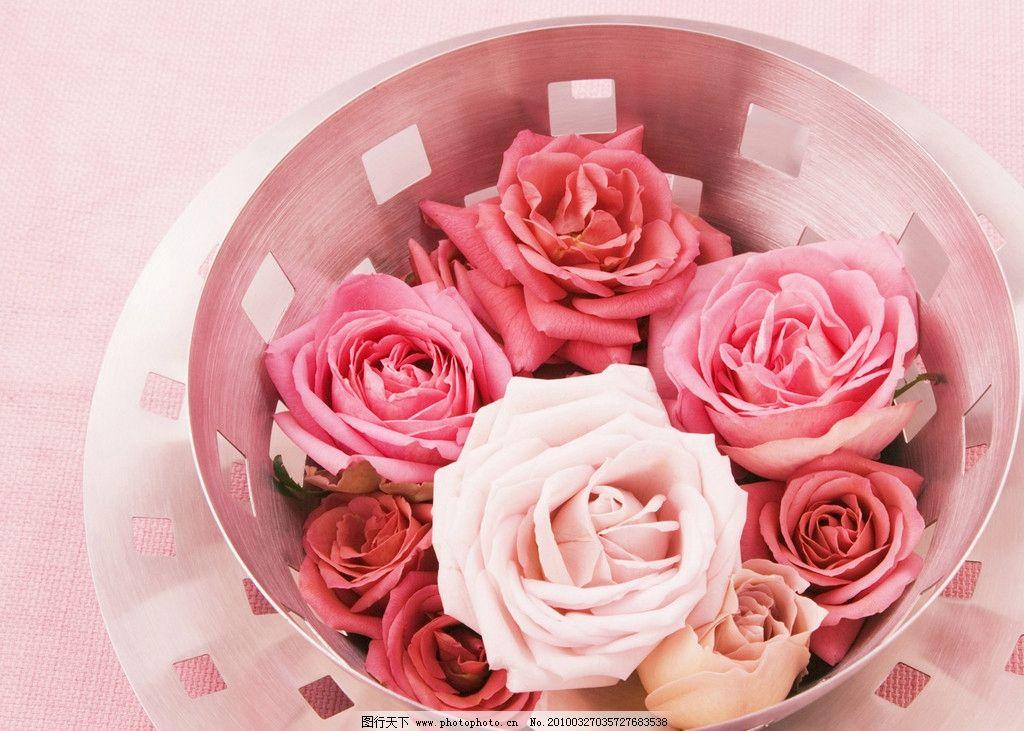 温馨 美丽 花朵 玫瑰花瓣 玫瑰 壁纸 粉玫瑰 白玫瑰 高清 浪漫 可爱