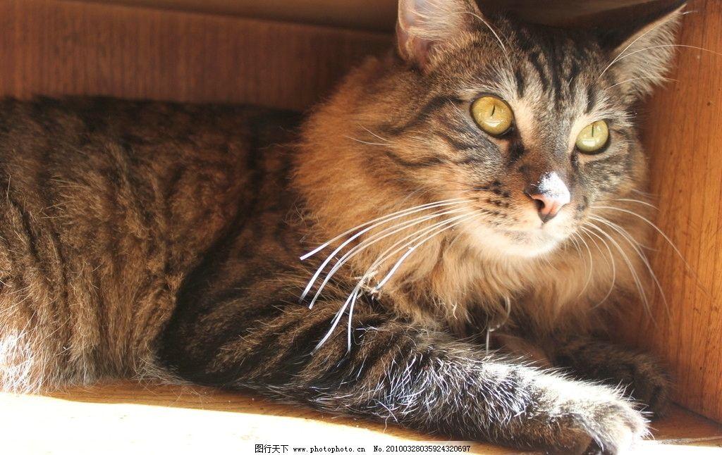 世界最可爱小猫咪图片