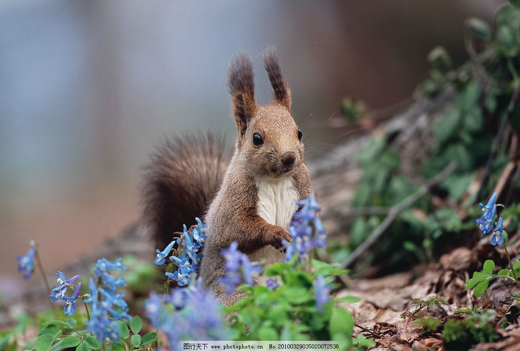 可爱的松鼠图片
