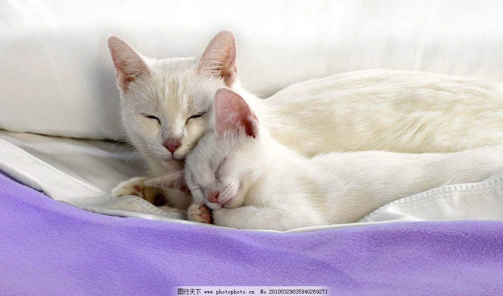 小猫 猫咪写真 小花猫 可爱的小猫 小动物 宠物 动物写真 宠物写真