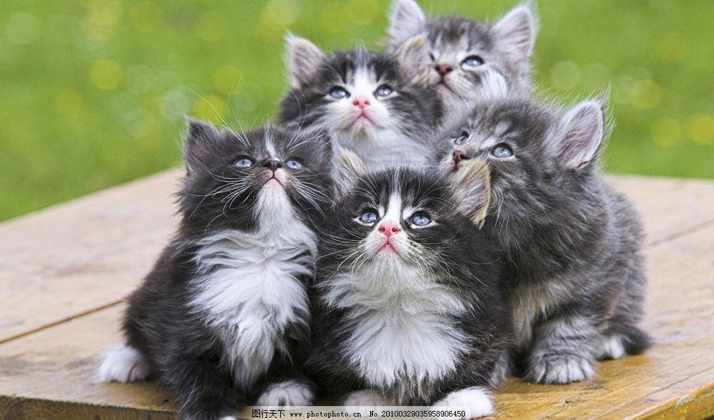 小花猫 猫咪写真 小猫 可爱的小猫 小动物 宠物 动物写真 宠物写真
