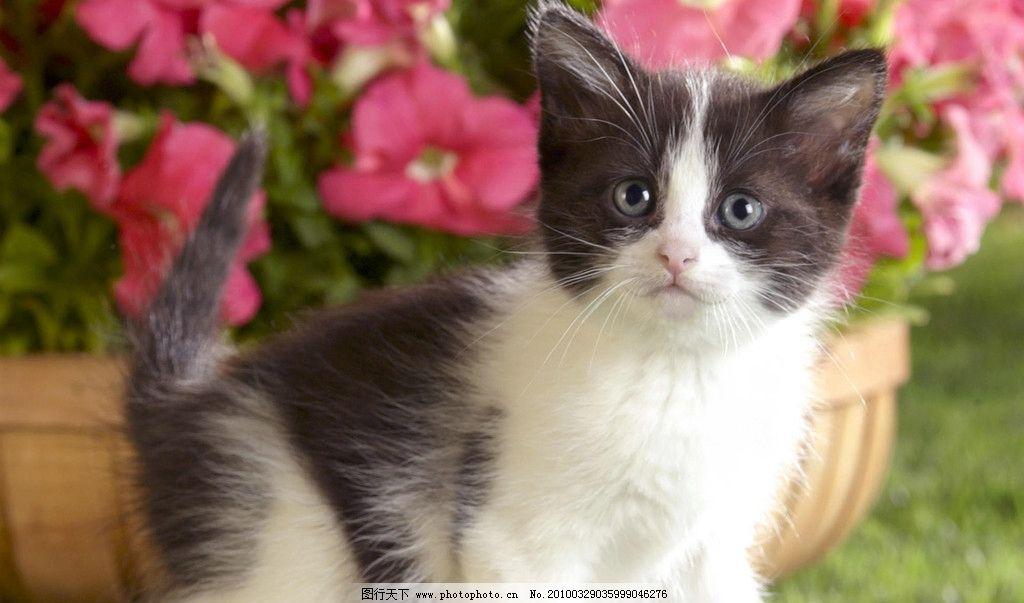 猫咪 猫咪写真 小花猫 小猫 可爱的小猫 小动物 宠物 动物写真