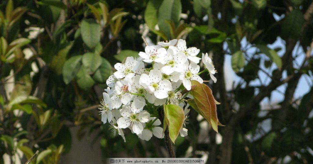 春天的气息 花树 绿芽 田野 植物 宁波 摄影