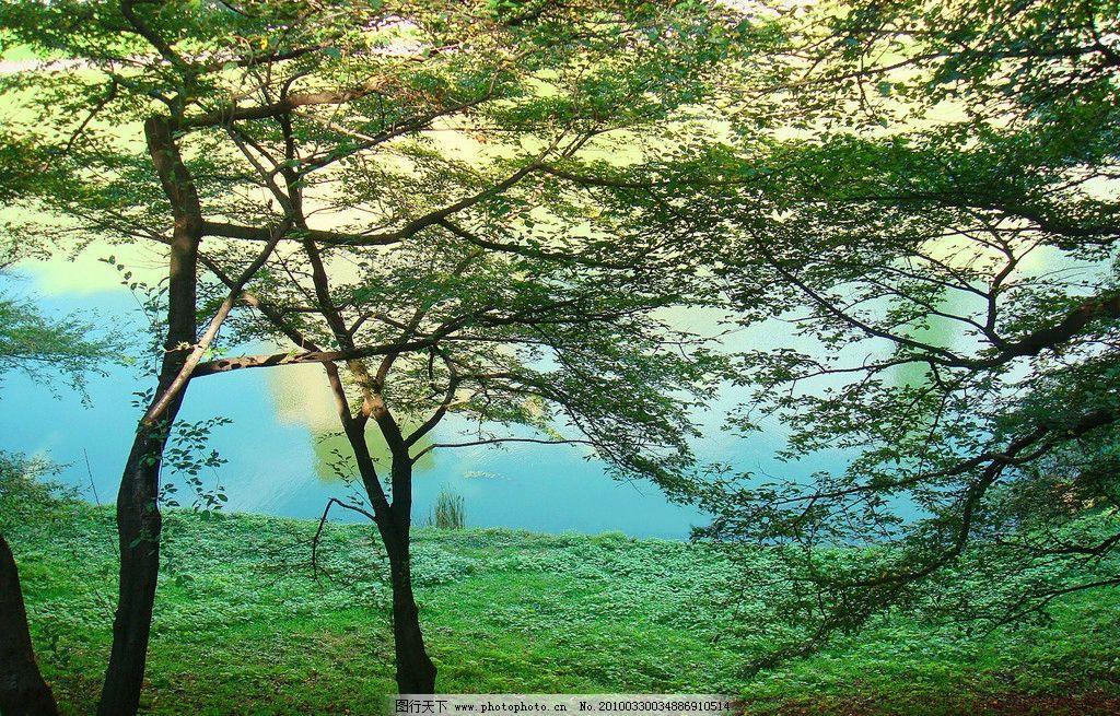 湖边 风景 绿 树 树木 自然 映 宁静 林 大自然 环境 自然风景 自然