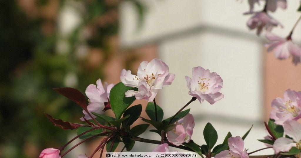 春天的气息 花树 绿芽 田野 植物 宁波 自然风景 自然景观